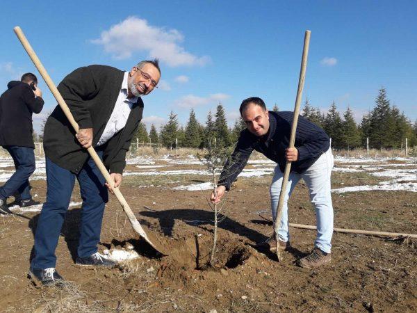 Konya Sarayonü İlçesi Ağaçlandırma Projesi